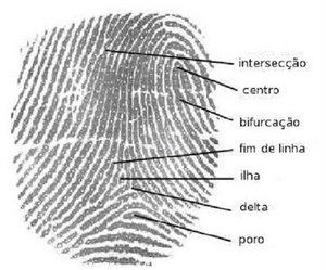 IMAGEM: Impressão Digital (Ilustração Técnica para curso de Ciência Forense) - mas, para mim, é um poema concreto, repara só.